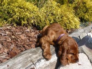 PURPLE GIRL 8 weeks