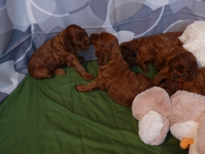 ALL PUPPIES 1 month