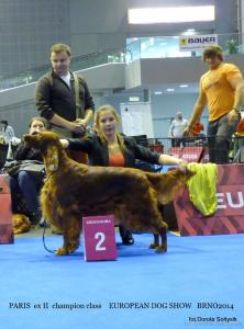 "EDS BRNO 26.10.2014 ""Paris"" Salford Princess z Arislandu - champion class - ex II"