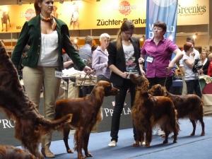 World Dog Show 18.05.2012 Salzburg Salford Midari z Arislandu SARI and Małgosia