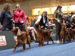 World Dog Show Salzburg 18.05.2012 Salford Princess z Arislandu Paris Ch.class Ex