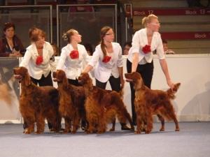 World Dog Show Salzburg 18.05.2012 breeding group Arisland kennel