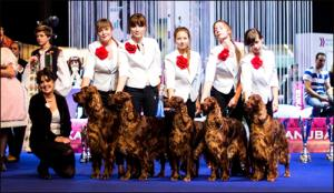 Europen Dog Show - Brno 2014, Arisland - BEST IN SHOW Breeding Group